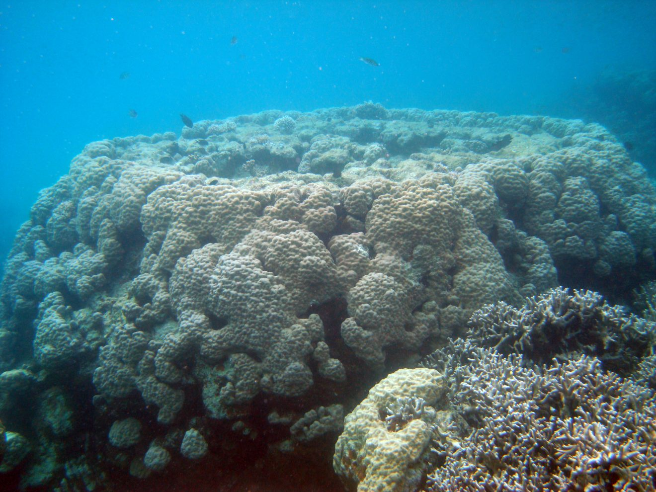 Photo of New Study from Florida Tech Finds Pacific Reef Growth Can Match Rising Sea