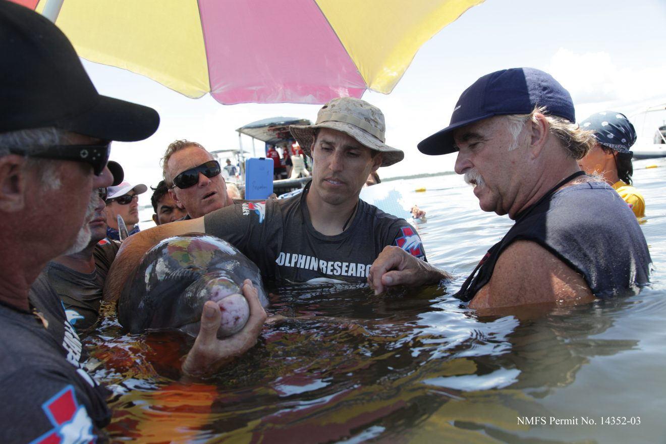 Photo of Florida Tech Helps Georgia Aquarium Complete Dolphin Study