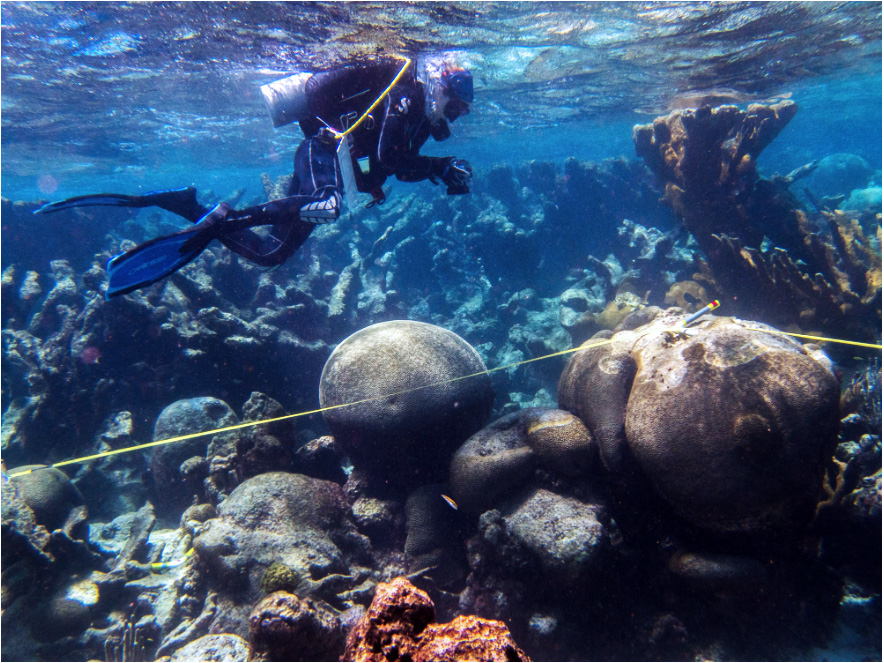Diving off the U.S. Virgin Islands to study coral reef structure