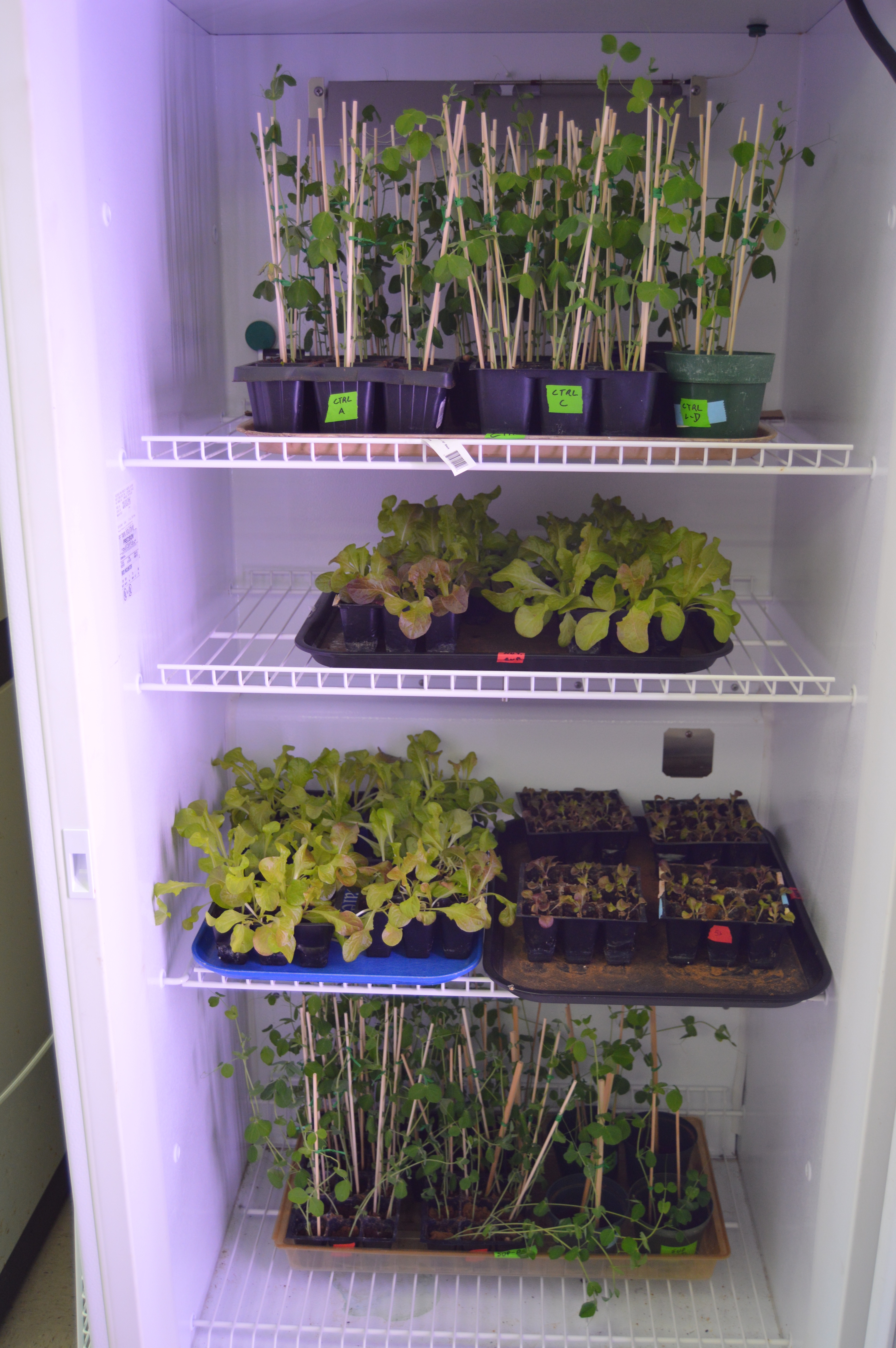 The Florida Tech Mars Garden growing chamber