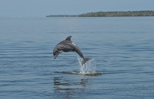 IRL dolphins