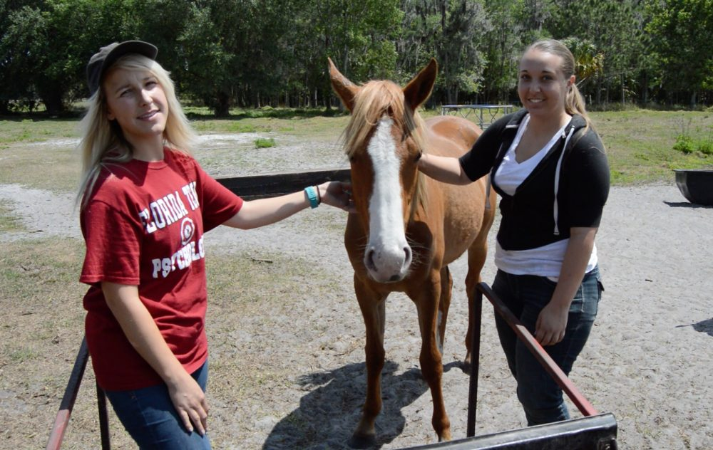 Photo of Psychology Students Use Experiential Therapy With Horses