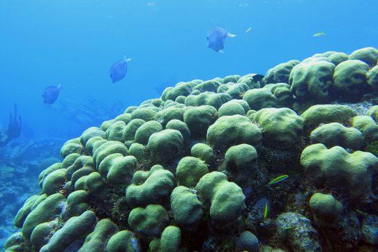 Florida Tech coral disease