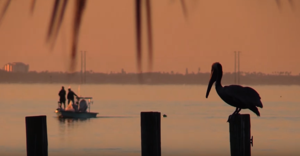 Photo of Communication Majors Create Moving Documentary About Indian River Lagoon
