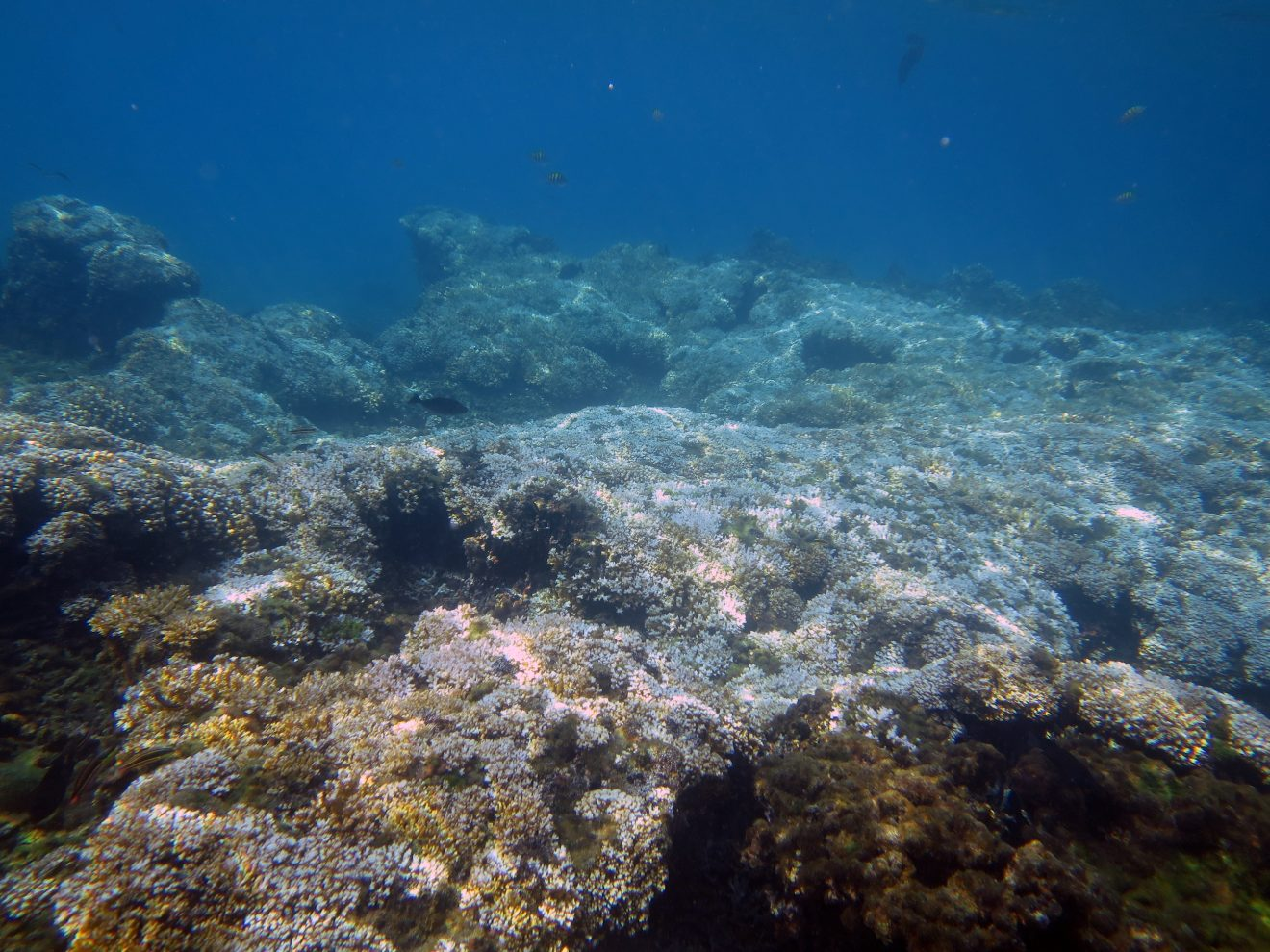 Photo of New Research Finds Ocean Warming Forces Reefs Into Cool-Water Refuges