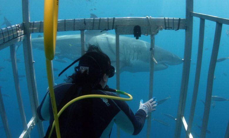 Photo of University Shark Expert Answers: Why Are Shark Attacks So Rare?