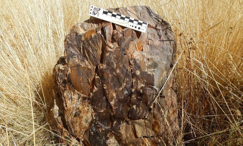 Photo of Climate Findings in the Fossils