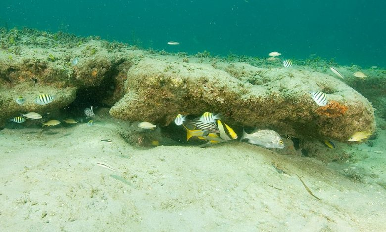 Photo of Florida Tech Professor Co-Authors Book on Nearshore Florida Reefs