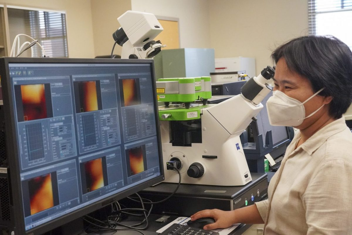 Dr. Linxia Gu, biomedical and chemical engineering and sciences and mechanical and civil engineering professor, working on the university's new atomic force microscope housed in her Bio-Mechanics Laboratory