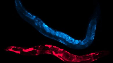 Photo of Researchers Deepen Understanding of Cellular Stress Responses