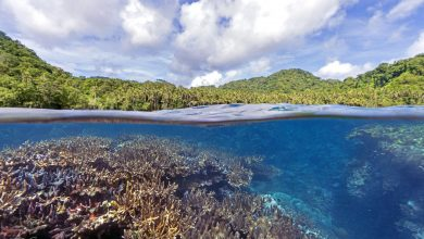 Photo of New Study Finds Local Conditions Can Worsen Global Coral Threats