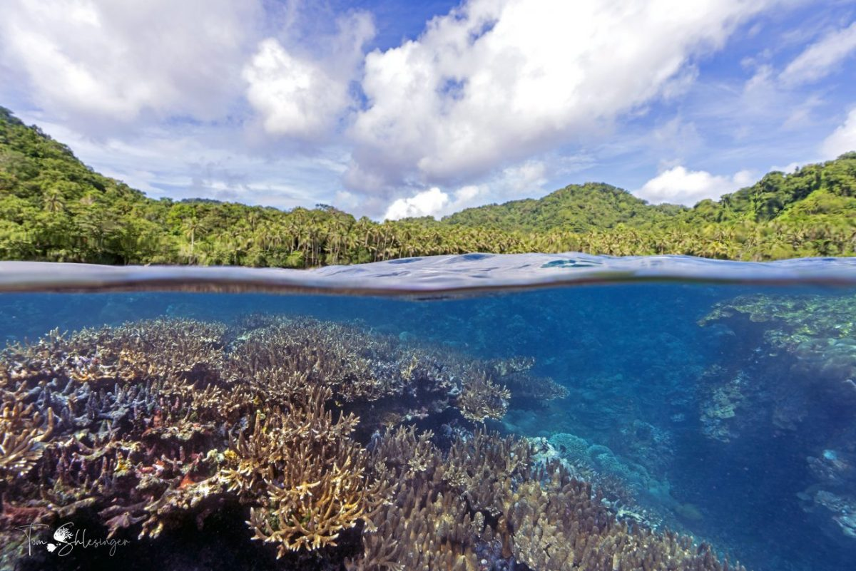 The photo shows coral reefs and nearby land in Papua, New Guinea.