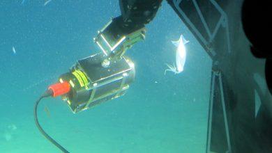 Photo of Alumni Found Underwater Camera and Lighting Company