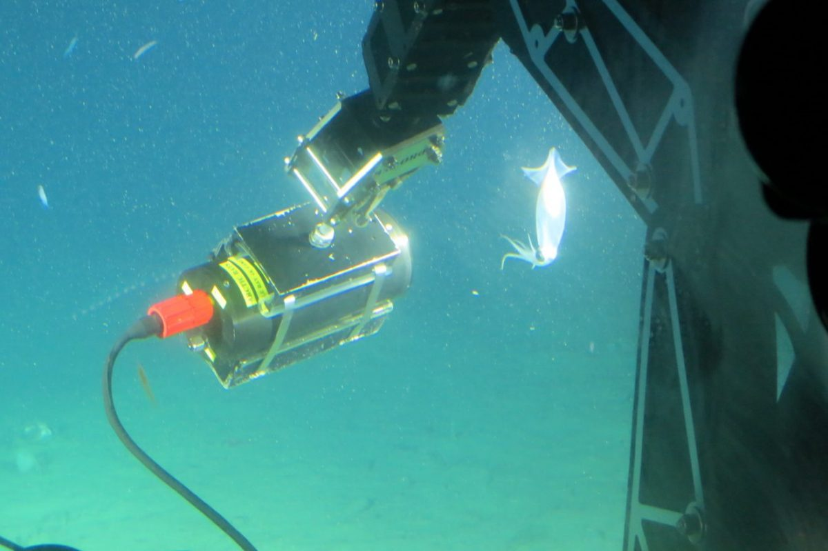 Alumni Found Underwater Camera and Lighting Company