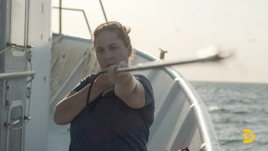 Photo of Florida Tech Shark Biologist Featured in Three Programs Now Streaming