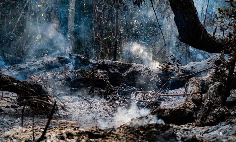 Photo of Study Shows Impacts of Deforestation, Forest Burning on Biodiversity in the Amazon