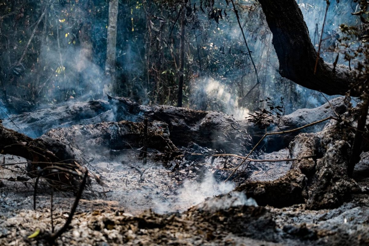 Image of smoldering, charred Amazon forest after a fire.