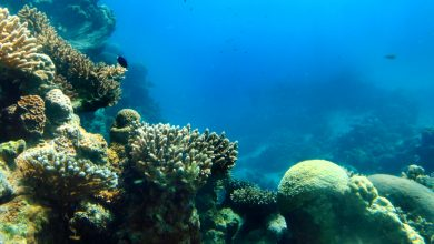 Photo of New Research Examines 3D Coral Printing Possibilities